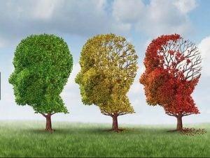 Cual es el Mejor Medio para Evitar el Alzheimer alimentos